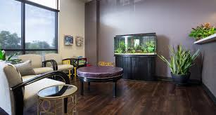 Dr Hamblin Dds Dental Office Interior Photography For