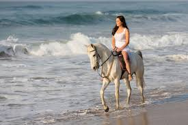 what you need to know about horseback riding in north myrtle beach