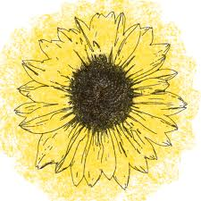sunflower line drawing free stock photo public domain pictures