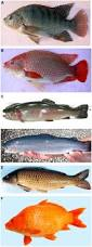 frontiers appearance traits in fish farming progress from