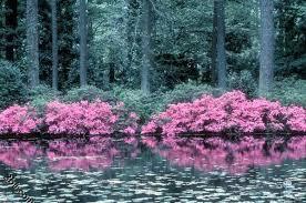 الطبيعة الخلابة images?q=tbn:ANd9GcQ