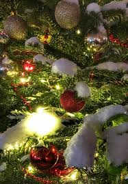 free images branch snow evening holiday fir christmas tree