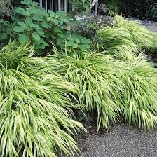 351 best ornamental grasses in the garden images on