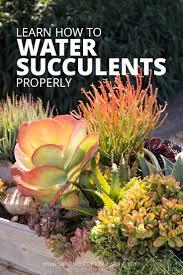 2504 best succulents images on pinterest succulent plants