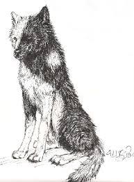 yin yang wolf by wooffy on deviantart