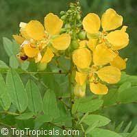 toptropicals com rare plants for home and garden yellow blue
