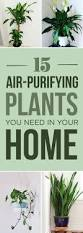 Best Indoor Plants Low Light by 15 Beautiful House Plants That Can Actually Purify Your Home