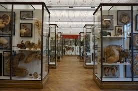 museum of anatomy paris gallery learn human anatomy image