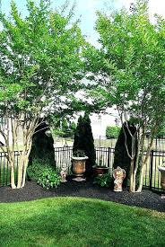 Backyard Privacy Ideas Best Trees For Backyard Privacy Creative Of Patio Privacy Ideas