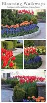 43 best around the house spring flower bulb inspiration images