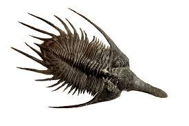 10 terrific facts about trilobites mental floss