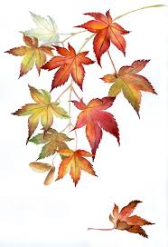 maple leaf tattoo meaning 2453 best tattoos images on pinterest drawings maple leaves and