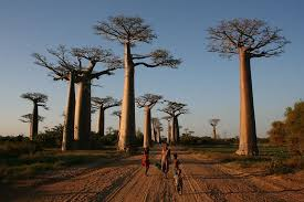 10 most amazing trees in the world 10 most today