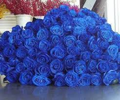 Blue Roses Blue Roses Via Facebook On We Heart It