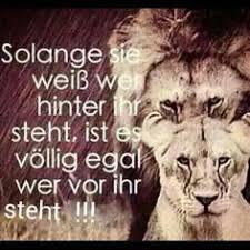 sprüche löwe versuche nicht wie ein löwe zu brüllen sprüche