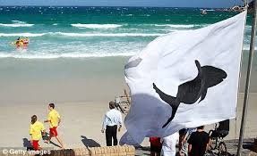 Great White Shark Attack Cape Cod - cape town shark attack tourist killed by u0027dinosaur sized u0027 great