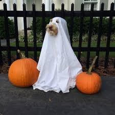 Funny Halloween Costumes Cats 23 Brilliant Baby Mason Jars Dog Halloween Halloween