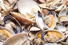 cuisiner des palourdes fraiches fruits de mer palourdes fraîches et coques préparés photo stock