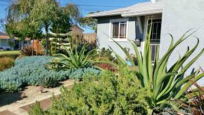 succulent garden ideas letz design