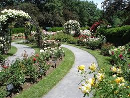 backyard rose garden