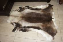 Reindeer Hide Rug Reindeer Skin Reindeer Skin Suppliers And Manufacturers At