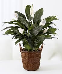 10 plants you can u0027t kill no green thumb needed proflowers blog