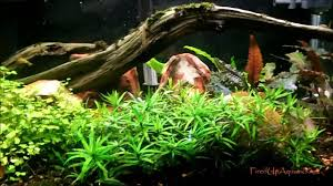 Aquascaping Plants Aquascaping With U0026without Co2 Youtube