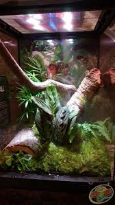Zoo Med Lighting by 87 Best Terrariums Images On Pinterest Reptile Enclosure