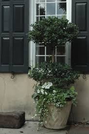 Rosemary Topiary 65 Best Topiaries Images On Pinterest Topiaries Boxwood Topiary
