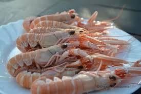 comment cuisiner les langoustines comment bien congeler les langoustines chez mon poissonnier