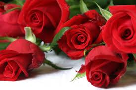 imagenes para enamorar con flores ttrbolnel mrycl8m61vr8a72c70ji aarzxu7vkrkej9 7odt uwa s0 d