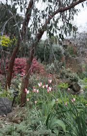 Melb Botanical Gardens by 102 Best Botanical And Public Gardens Images On Pinterest Garden