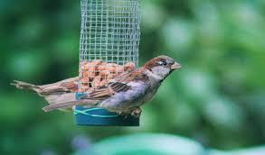 Backyard Wild Birds by Backyard Threats To Wild Birds Middlebury Agway