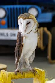 Ohio wildlife tours images Ohio wildlife center animal ambassador barnaby was wise old owl jpg