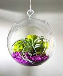 decorating lovely sphere glass hanging plant terrarium ideas with
