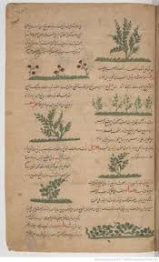 al qazwini u0027s sketch of the distribution of land and sea from his