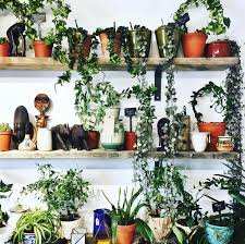 Air Purifying Plants 9 Air by 64 Best Non Toxic Living Images On Pinterest Indoor Gardening