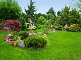 make your yard look landscaped awesome backyard trees landscaping