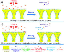 antifouling membranes for sustainable water purification