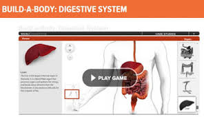 Online Human Body Promoting Success Digestive Body System Functions For Science