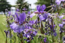 canadian native plants wildlife friendly gardening tips native plants