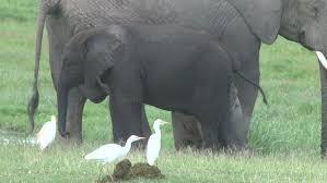 elephant english zoo alphabet letter e animation english zoo
