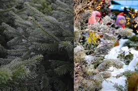trees jpg fit u003d6016 4000