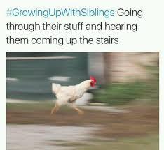 Chicken Running Meme - running cock meme by rexrapt0r memedroid