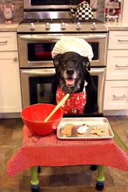 Dog Cooking Meme - my friend s dog baking christmas cookies rebrn com