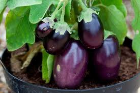 growing your own vegetables rhs gardening