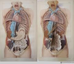 Fundamental Anatomy And Physiology Anatomy Books Health And History