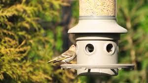 backyard bird watching pine siskin youtube
