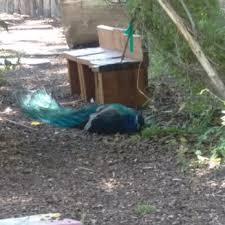 Backyard Birds Utah Tracy Aviary 171 Photos U0026 88 Reviews Zoos 589 E 1300th S
