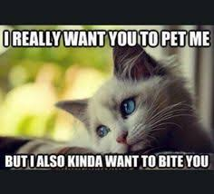 I Can Haz Meme Generator - funny animal pictures cat memes just like cat funniest animals